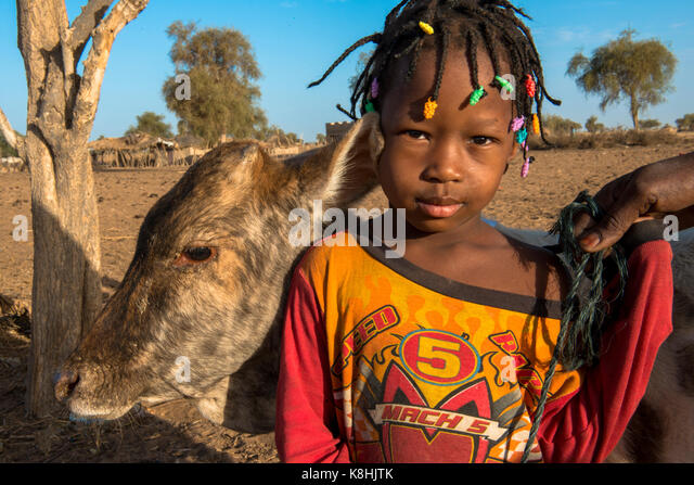 Peul child with cattle. senegal. - Stock Image