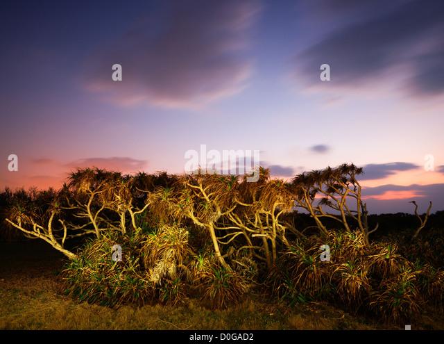 Tropical Plants at dusk in Manzamo, Okinawa - Stock Image