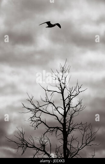 Bird flying over dead tree in silhouette. Dark and ominous sky. Dramatic and mysterious nature scene. - Stock-Bilder