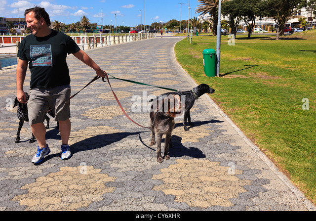 A man walks his dogs along the promenade in Sea Point Cape Town South Africa. - Stock Image