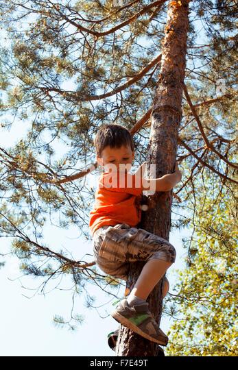 little cute boy climbing on tree hight - Stock Image