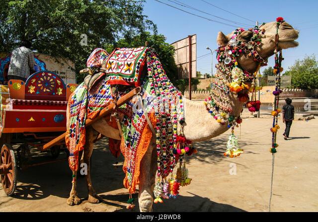 Jaisalmer, Rajasthan, India. Decorated camel - Stock-Bilder