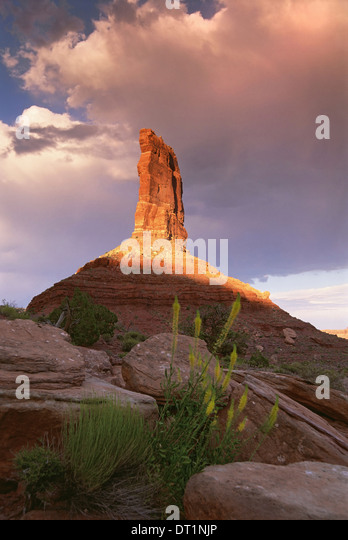 The Princess Plume rock pillar eroded gritstone pillar on the top of a rise in the Valley of the Gods - Stock Image