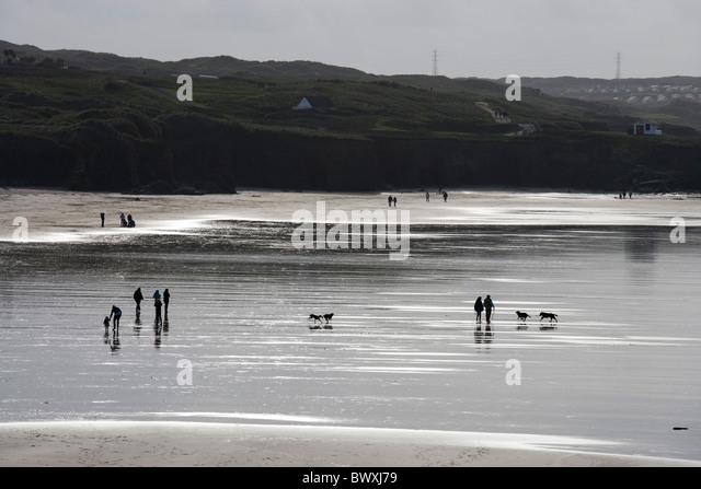 Gwithian Beach Dogs