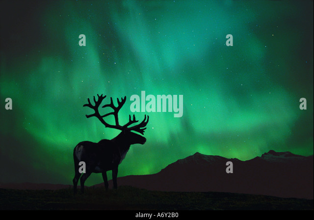 Silhouette of Caribou w Northern Lights Digital - Stock Image