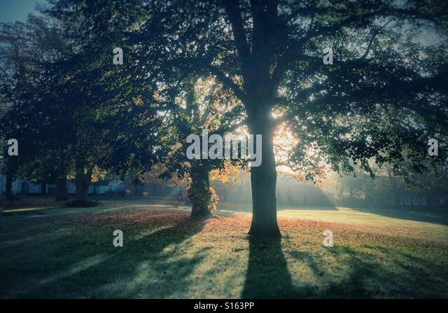 Early morning sunshine through autumnal trees - Stock-Bilder