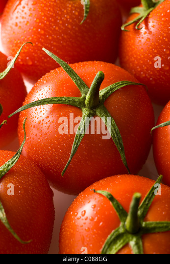 Fresh vine tomatoes on a white background - Stock Image