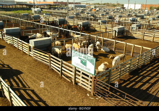 Oklahoma livestock auction results, the buyer of a long put option quizlet