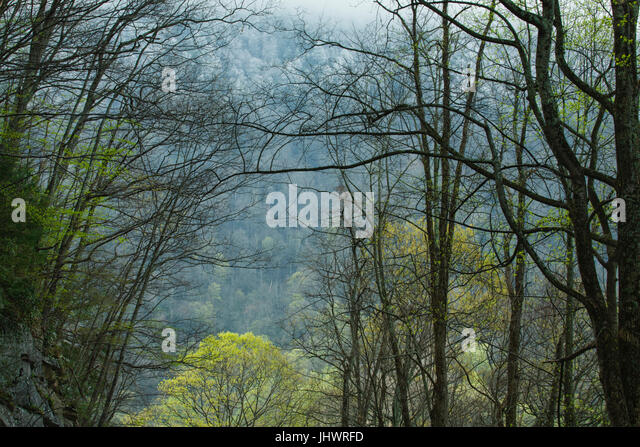 Spring in the Great Smoky Mountains National Park, TN - Stock Image