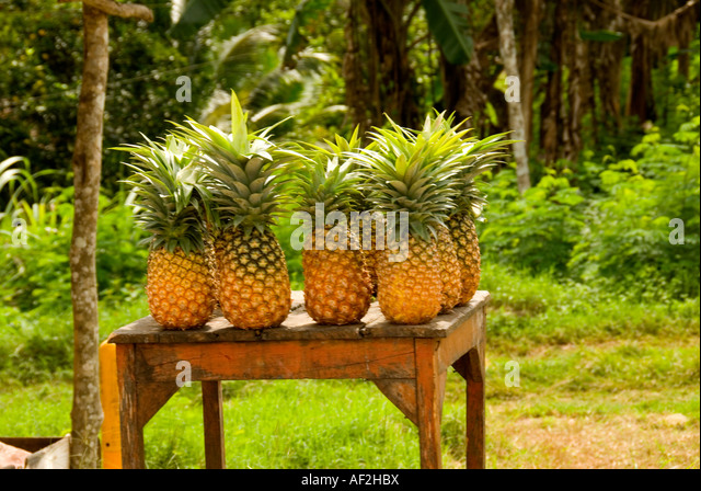 Costa Maya Mexico fresh pineapples for sale at outdoor stand - Stock Image