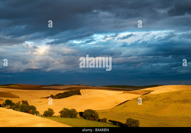 Sunlight breaks through the clouds to light up mature wheat fields in the Palouse region of Washington - Stock-Bilder