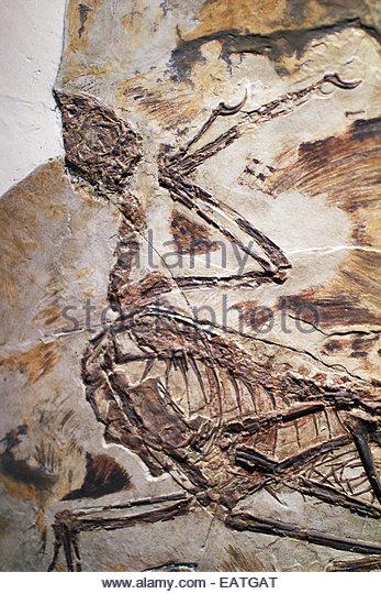 paleozoological museum stock photos amp paleozoological