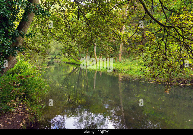 Reflections in lake old mill pond, Water-cum-Jolly, with trees - Stock Image