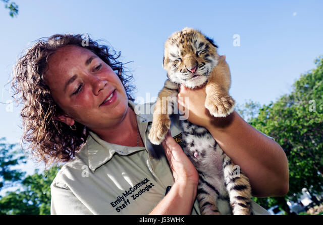 Arkansas Eureka Springs Turpentine Creek Wildlife Refuge rescuing exotic wild cats tiger cubs eyes closed woman - Stock Image