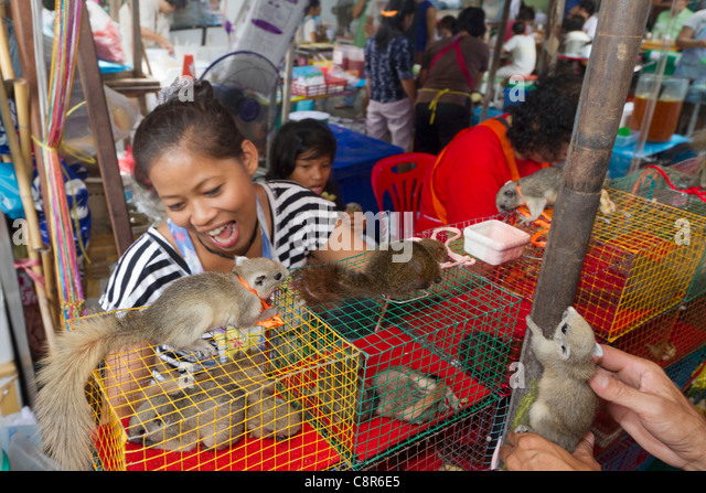 squirrel at market stall in Bangkok, Thailand - Stock Image