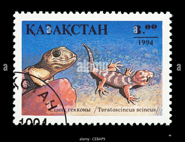 Postage stamp from Kazakhstan depicting a small lizard (Teratoscincus scincus) - Stock Image