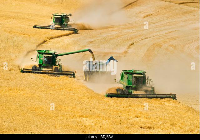 Three John Deere combines harvest barley on hillside terrain while one unloads harvested barley into a grain cart - Stock Image