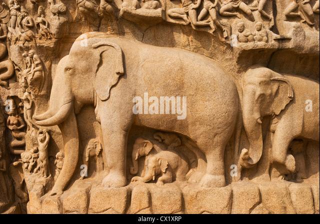 Elk201-4266 India, Tamil Nadu, Mamallapuram, Arjuna's Penance relief carving - Stock Image