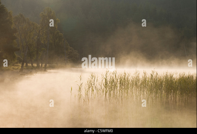 Loch Pityoulish on misty morning, Cairngorms National Park, Scotland, Great Britain. - Stock-Bilder