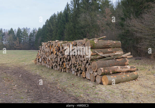 Freshly cut tree logs piled up near the road in a forrest - Stock Image