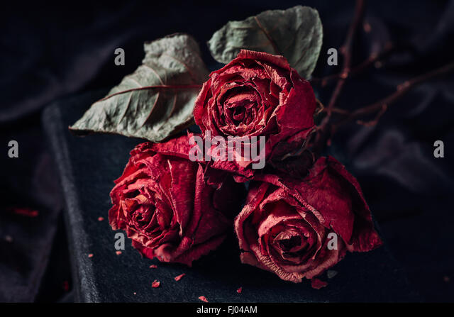 Three dry roses - Stock Image