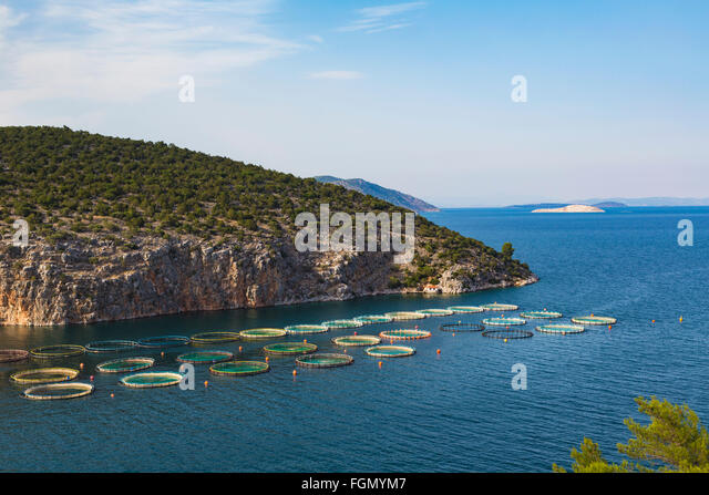Pisciculture stock photos pisciculture stock images alamy - Trout farming business family mountains ...