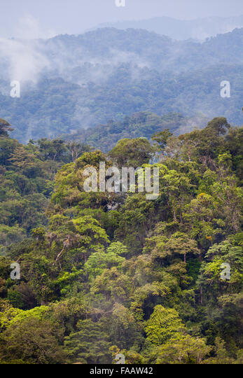 Rain forest in Burbayar nature reserve, Republic of Panama. - Stock-Bilder