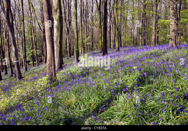 Portglenone Forest Park in county Antrim, Northern Ireland. - Stock-Bilder