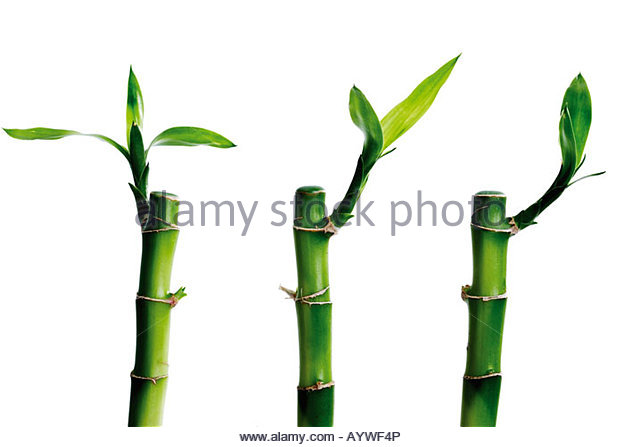 feng shui bamboo stock photos feng shui bamboo stock images alamy. Black Bedroom Furniture Sets. Home Design Ideas