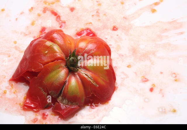 Smashed Brandywine Heirloom Tomato - Stock Image