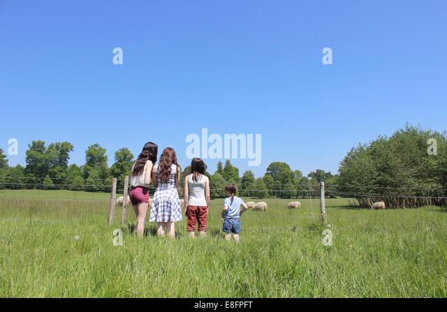 Rear view of four girls standing by fence looking at sheep - Stock Image