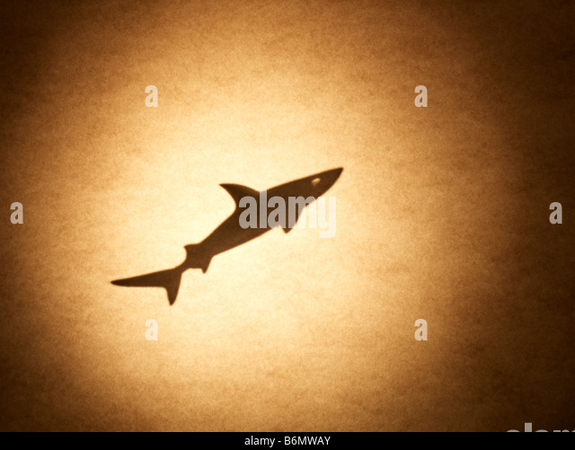 Shark - Stock Image