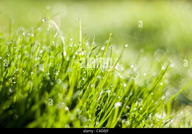 fresh grass with dew drops - Stock-Bilder
