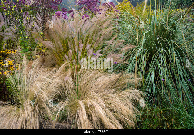 ornamental grasses border grasses stock photos