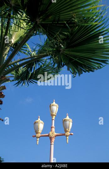 Aruba Oranjestad Street Lights with Palm Trees - Stock Image