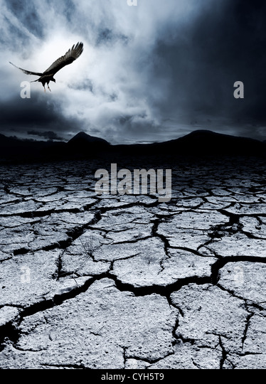 A bird flies over a desolate landscape - Stock-Bilder
