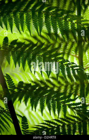 Ferns, Christchurch, New Zealand - Stock Image
