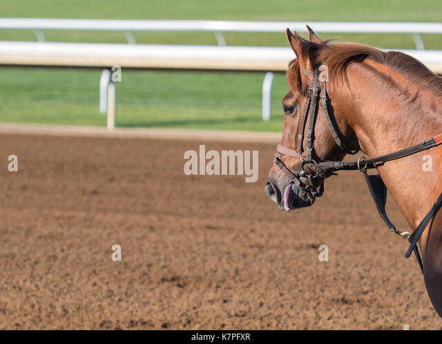 Chestnut Horse with Copy Space over dirt racing track - Stock Image