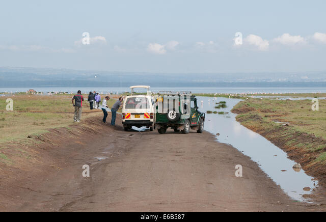 Flooded track on south side of Lake Nakuru with clients disembarking to see flamingos and pelicans Kenya Africa - Stock Image