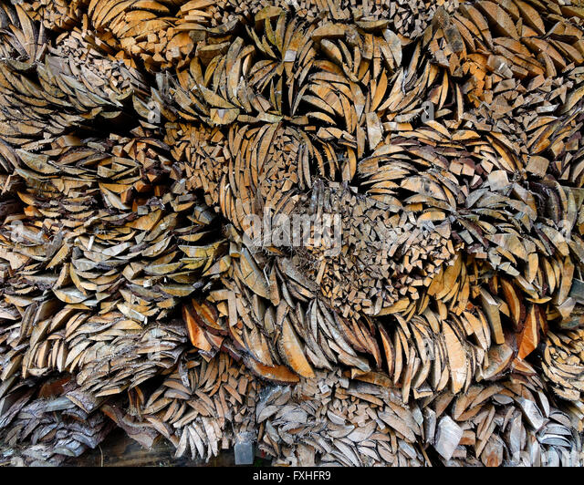 CONCEPT PHOTOGRAPHY: Wood the Alternative Energy - Stock Image