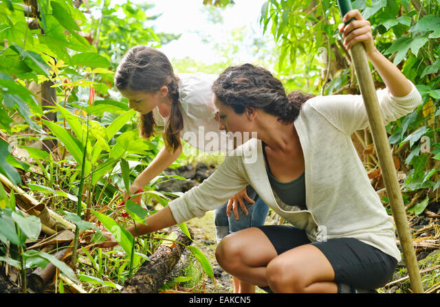 Woman and girl inspecting plants in garden - Stock-Bilder