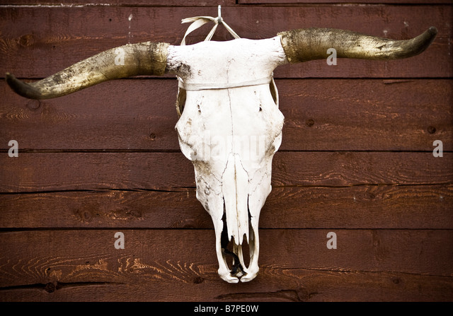 An animal skull hangs on a wall the Kitigan Zibi Algonquin Native reserve in Quebec, Canada - Stock-Bilder
