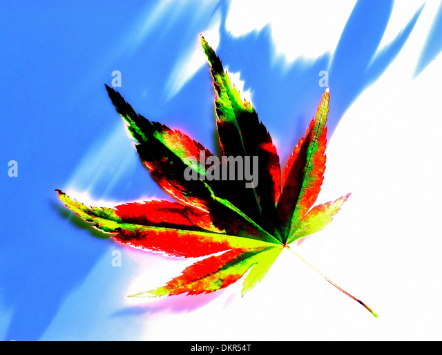 Leaf, plant, maple, maple leaf, alienated, red, green, yellow, concepts, - Stock-Bilder
