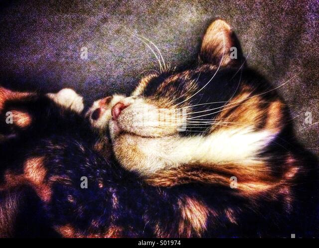 Sleeping cat - Stock Image