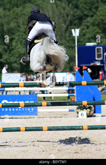 a rider in a dark blue jacket on a white  horse soars over a blue and white gate in  competition on Cisarsky Island - Stock Image