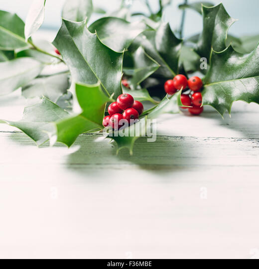 European Holly (Ilex aquifolium) leaves and fruit - Stock Image