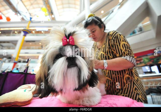 Bangkok, Thailand. 19th Nov, 2015. A woman arranges a dog's hair during the Seacon Square International Dog - Stock Image