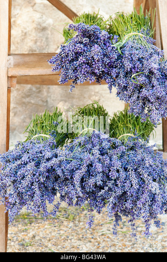 Lavender bundles for sale outside of a shop in Sault, Provence, France - Stock Image