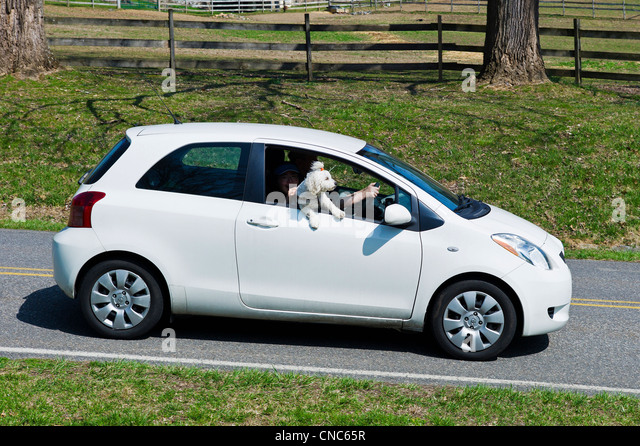 Small Car Windows : Humor animal car stock photos