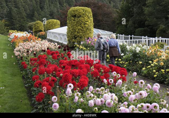 UK, England, Rothbury, Cragside, Formal Garden, flowers, dahlias, - Stock Image